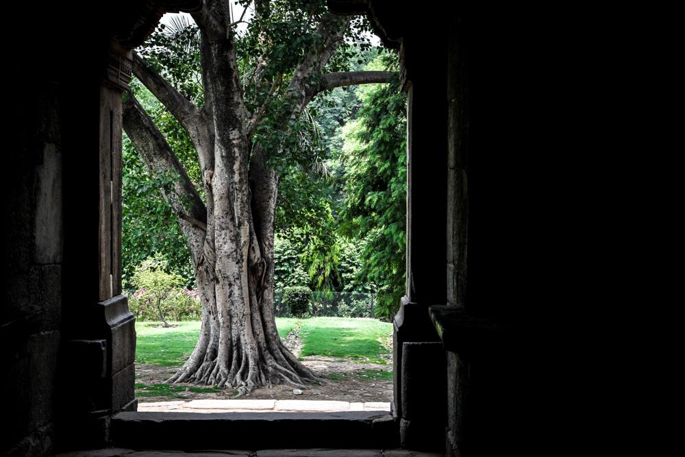 Lodi Gardens view through door