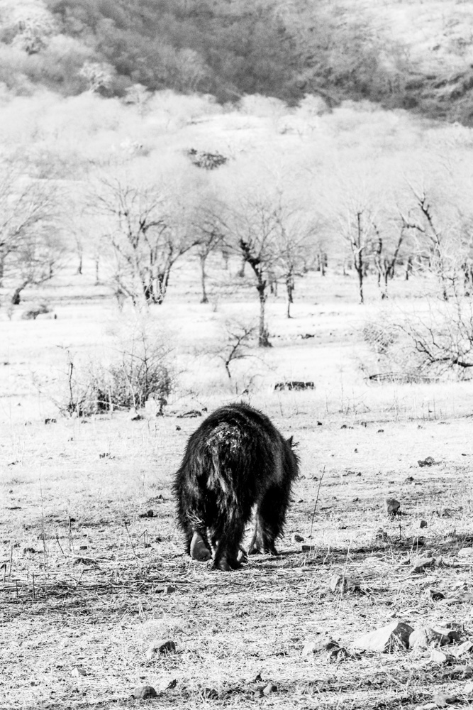 Black Bear Rathanborne National Park